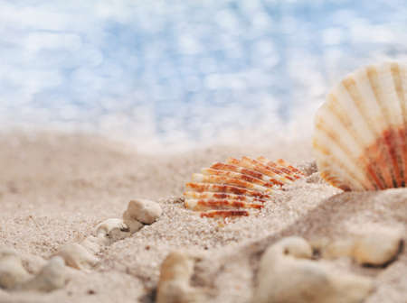 Two small seashells and pebbles on the beach with perfect seascape in the sun. Place for text. Close, selective focus. Banner template.