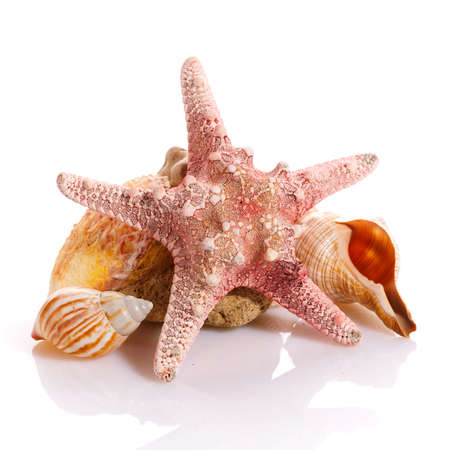 Starfish and different seashells on a white background. Close up. Stock fotó