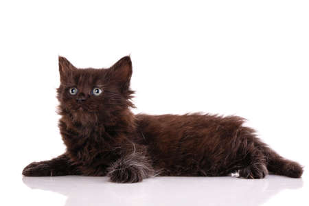 Black kitten lies in the studio on a white background and looks up. Side view. Banque d'images