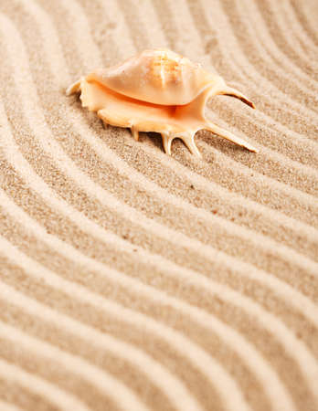 Beach sand and one large seashell. Background of sea beach. Place for text. Banque d'images