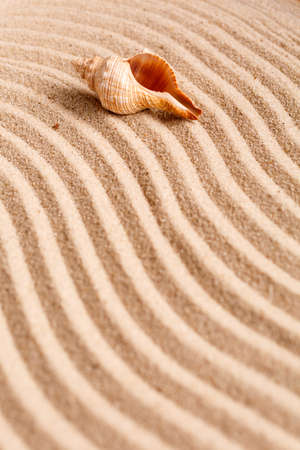 Yellow sand beach. Tropical seaside concept. Beautiful seashell on beach. Exotic island vacation. Banner template with place for text. Top view. Banque d'images