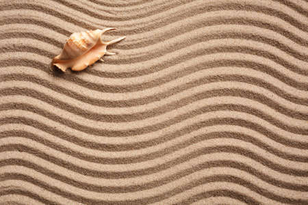 Background of seashell on sand. Wavy sand texture with place for text. Top view. Banner template.