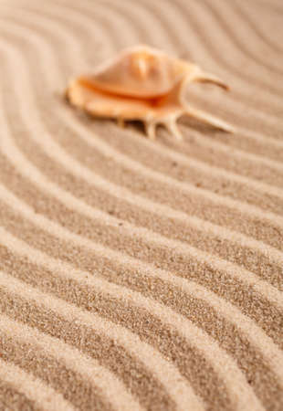The original seashell is in the upper right corner. Wavy sand texture. Sand background. Place for text or product. Marine beach motif. Banque d'images
