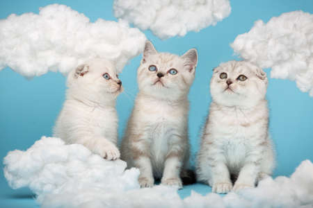 Three small cats sitting on a blue background with cotton clouds around. 版權商用圖片