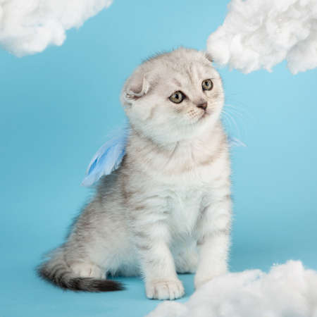 Adorable little kitten with blue feathery wings among the white clouds.