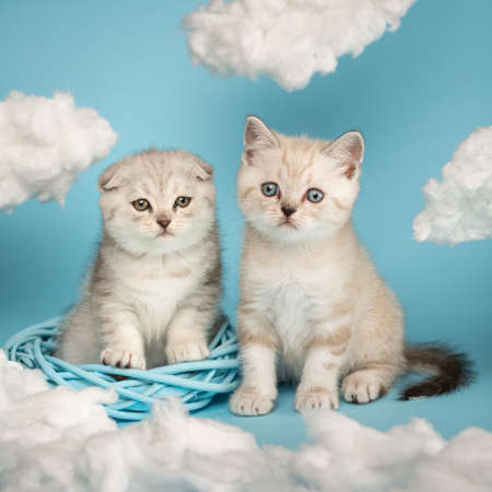 Two little newborn fluffy kittens looking curiously to the side playing in a wicker wreath.