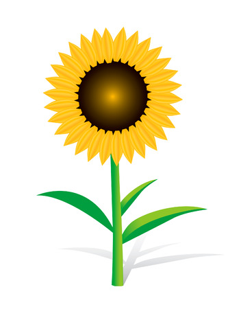 going green: Sunflower on white Illustration