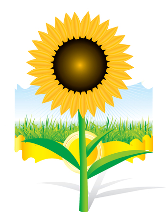going green: Beautiful sunflower background Illustration