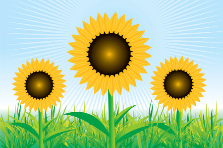 Beautiful sunflower background Stock Vector - 5835435