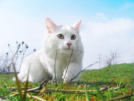 cat hunter