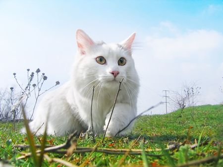 white cats: cat hunter