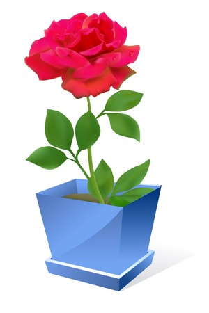 rose stem: red rose flower in pot om white background