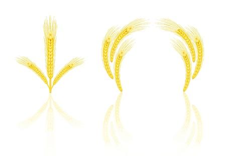 Yellow wheat Vector