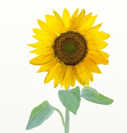 Aquarell-Sonnenblume