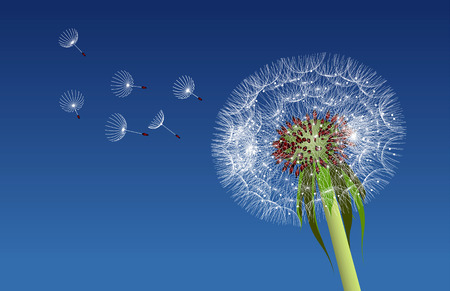 Dandelion seeds blown in the blue sky. Vector illustration Vector