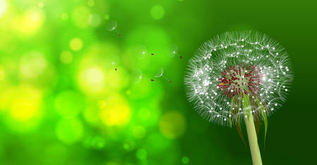 airiness: Dandelion on blurred green bokeh background. Vector illustration