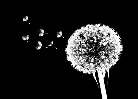 Vector silhouette of a dandelion on a black background Vector