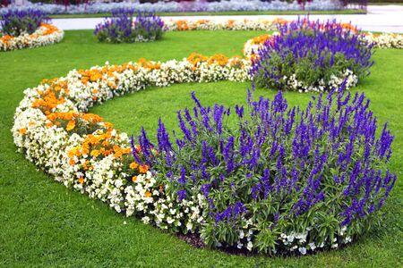 garden marigold: flower garden background