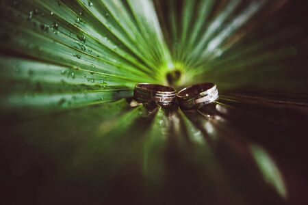 Two wedding rings on a leaf photo