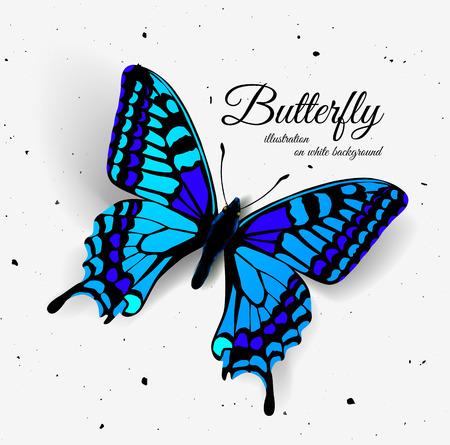 mariposa azul: Mariposa realista. Ilustración vectorial de una vista desde arriba