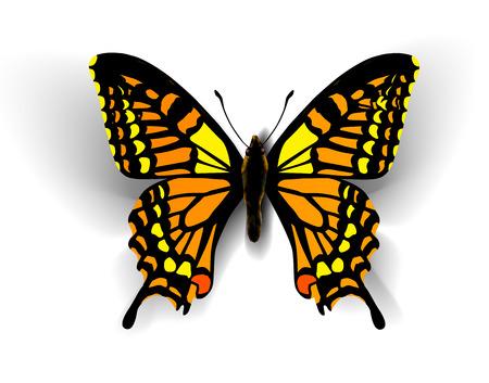 butterfly: Bướm thực tế. Vector hình minh họa của một cái nhìn đầu