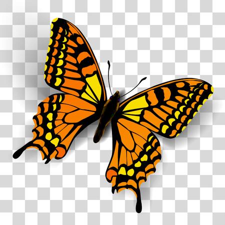 mariposa: mariposa realista en el fondo transparente. Vector ilustración de una vista superior