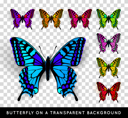 butterfly background: Realistic butterfly on transparent background. Vector illustration of a top view Illustration