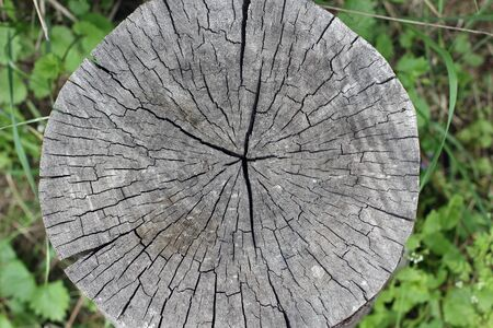 Old tree cross-sectional with age rings. Close up composition