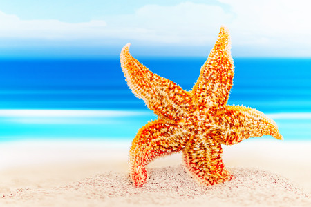 Dancing starfish against the background of the sea shore Stock Photo
