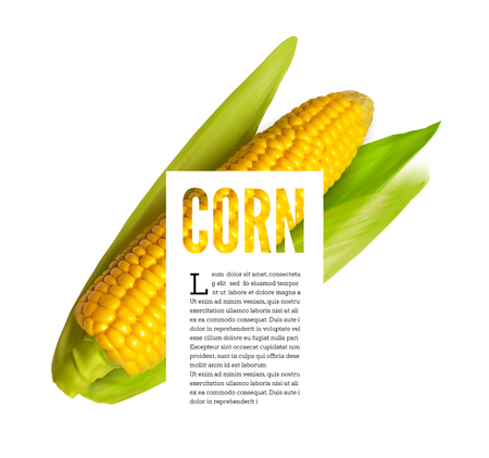 Corn ear isolated on white with text block
