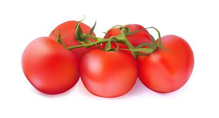 Set di pomodori rossi su sfondo bianco. Illustrazione realistica di vettore