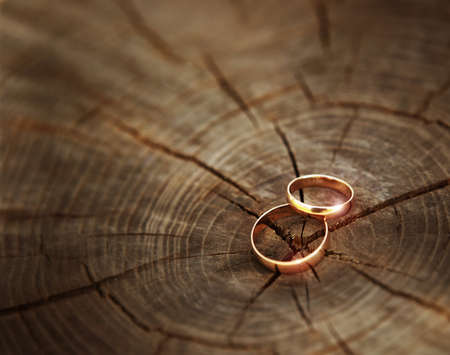 Two wedding rings lying on a wooden stump close-up. Wood cut texture on background