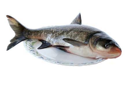 Fresh fish against the white background