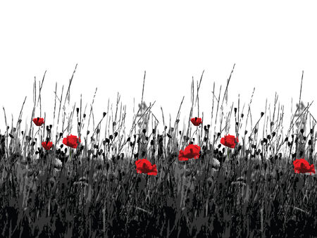 Blackly white background with the flowering of the red poppies