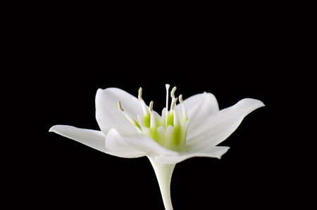 White flower against the black background