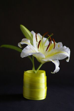 White lily against the black background Stock Photo - 6567041