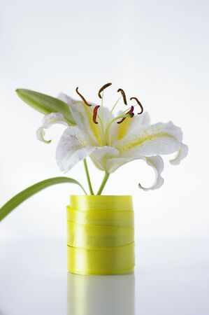 Flower of lily against the white background