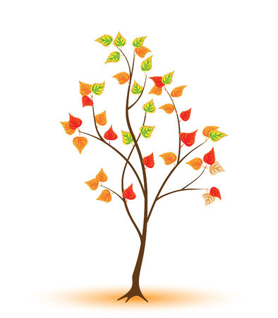 Young autumnal tree against the white background Stock Vector - 7962415