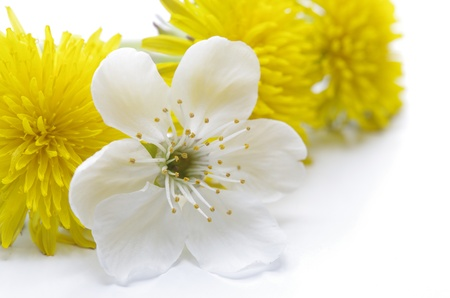 Spring flowers against the white background