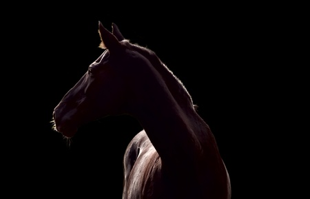Silhouette of beautiful horse against the black background Stock Photo