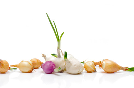 Onions for planting on a white  Stock Photo