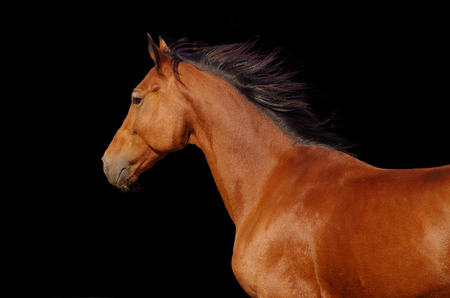 Portrait of a young horse on a dark