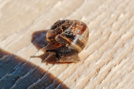 slow motion: little snail on the Board