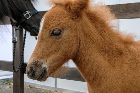 cute little foal