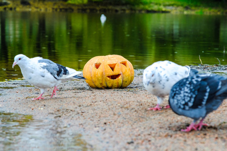pumpkin for Halloween in the Park on the banks of the river Stock Photo