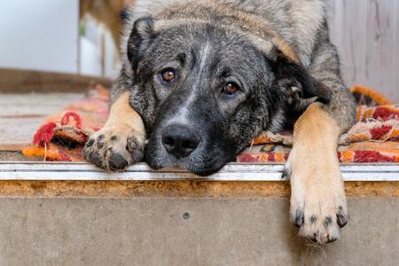 rustic sad dog sitting near the house