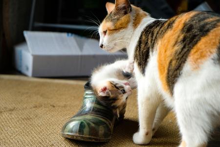 little kitten in the Shoe