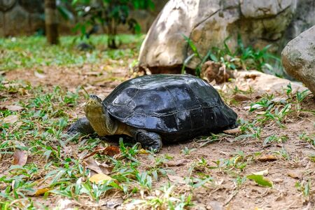 turtle crawling on the grass in the forest