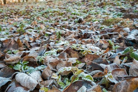 the frozen leaves and tree branches sparkling ice