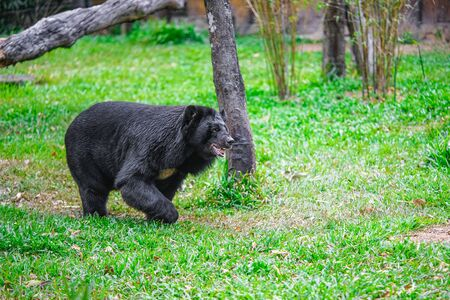 the beautiful brown bear in a Park on the island of Phu Quoc